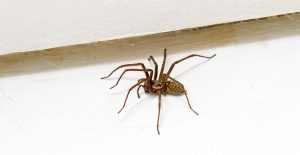 Spiders get inside your home easily, use Miss Muffet's Revenge to keep them out.