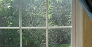 Spiders will stay away from your windows after applying Miss Muffet's Revenge