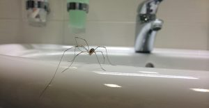 Spiders like to hide near a water source.