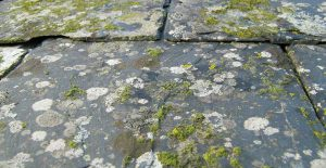 Remove lichen on your roof