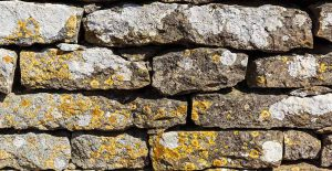 Learn how to remove lichen on stone
