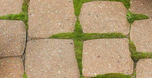 Remove moss inbetween pavers with Wet & Forget