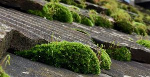 Remove moss on shingles
