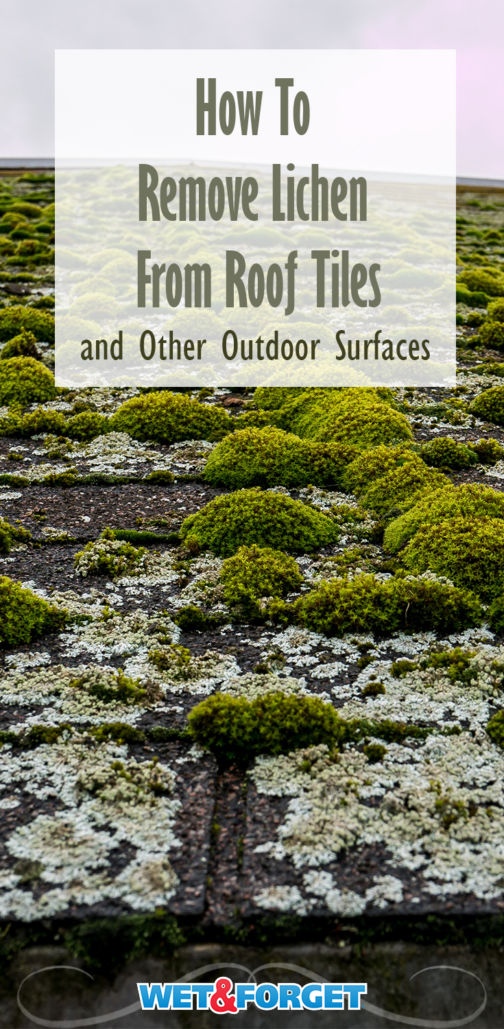 Trying to remove the lichen from your roof or outdoor surface? Well, look no further! Check out this article on how to do just that.