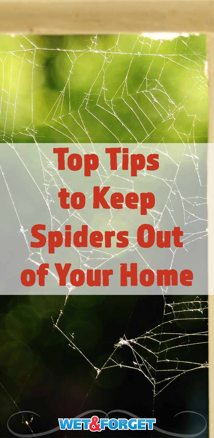 Starting to see more spiders this fall? Keep those 8-legged unwanted guests out of your home with these tips!