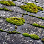 Remove moss from your roof with Wet & Forget!