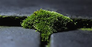 Get rid of moss on your roof to avoid cancellation of your homeowner's insurance .