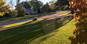 Spiderweb outside