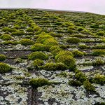 Lichen and moss on a roof.