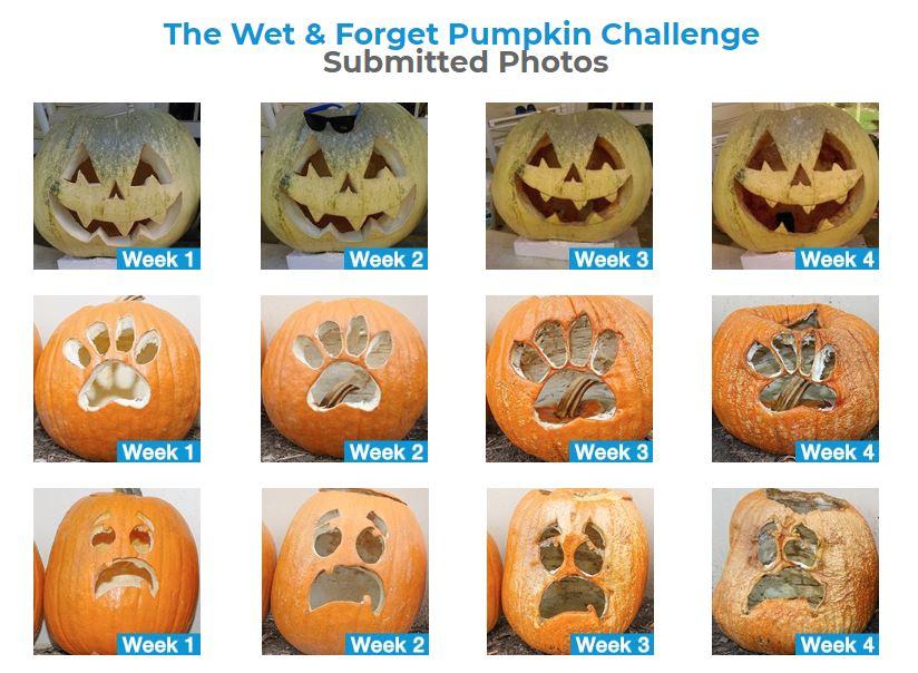 Pumpkin Preservations with Wet and Forget