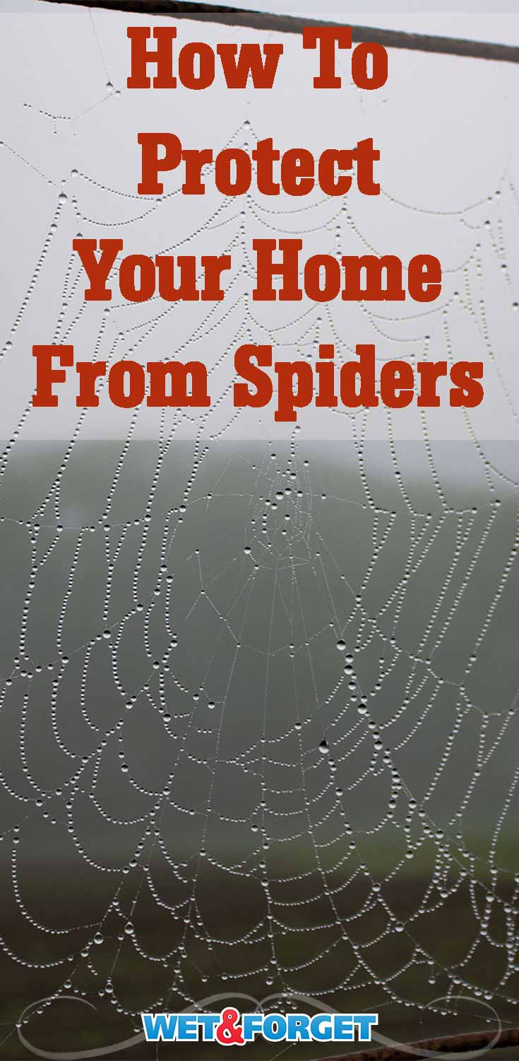 Find out how to protect your home from spiders- both inside and out!