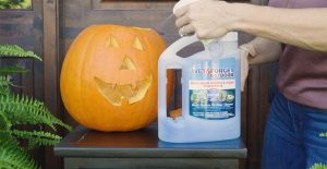 preserve pumpkins with wet and forget