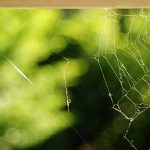 Spiders like to create webs in corners.