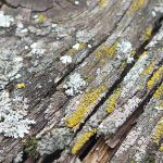 Remove lichen on your wood deck