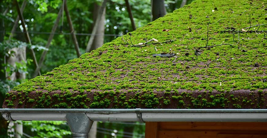 Learn how to remove moss on your roof!