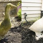Spray Wet & Forget on your garden statues to clean up green and black algae.