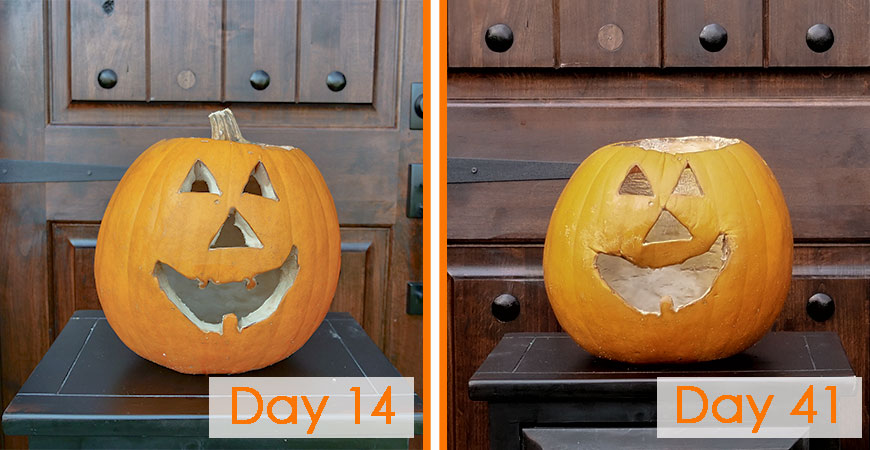 Preserve carved pumpkins with Wet & Forget Ready To Use!
