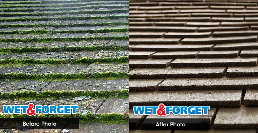 Before and After using Wet & Forget for roof moss